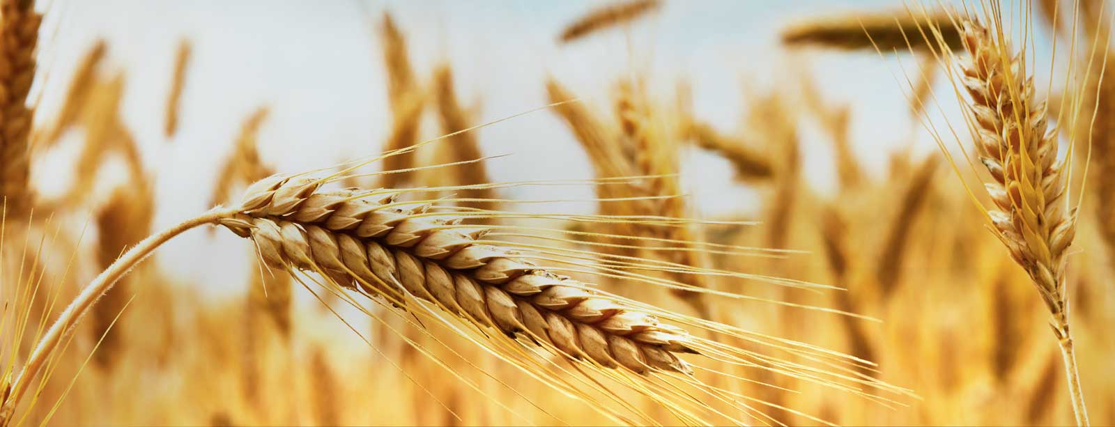 wheat-slider