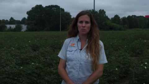 Cotton Disease ID